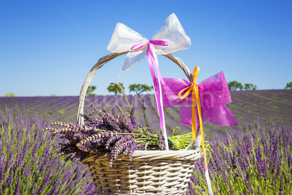 lavender in a basket  Stock photo © vwalakte