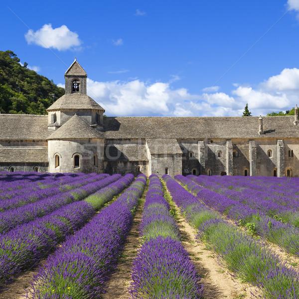 аббатство лаванды цветы Франция Сток-фото © vwalakte