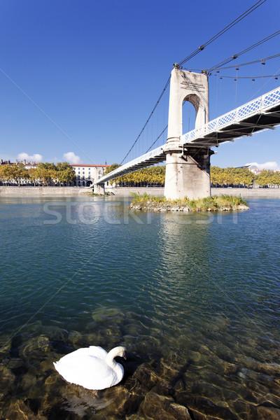 Branco cisne passarela rio Lyon ponte Foto stock © vwalakte
