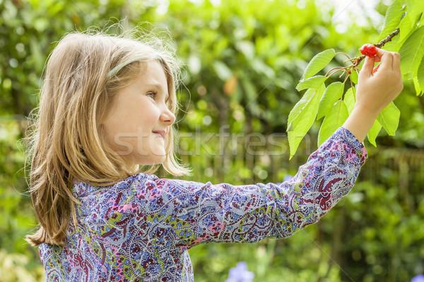девушки Вишневое дерево лет солнце ребенка Сток-фото © vwalakte