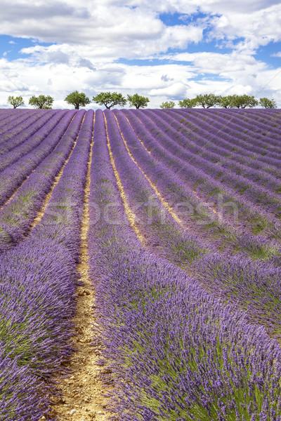 Verticaal lavendel veld Frankrijk Europa bloem Stockfoto © vwalakte