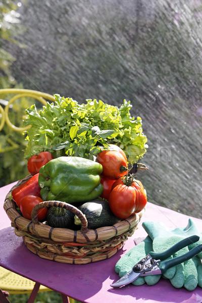 Gemüse Wasser Jet frischem Gemüse Tabelle Garten Stock foto © vwalakte