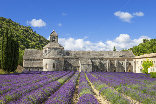 Famous Abbey of Senanque Stock photo © vwalakte
