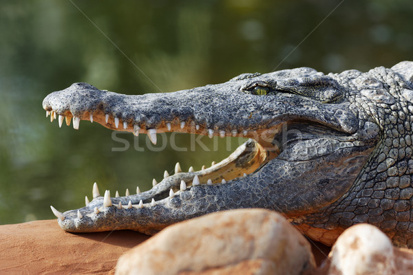 open big mouth Stock photo © vwalakte
