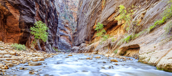 The iconic bend of the Virgin River Stock photo © vwalakte