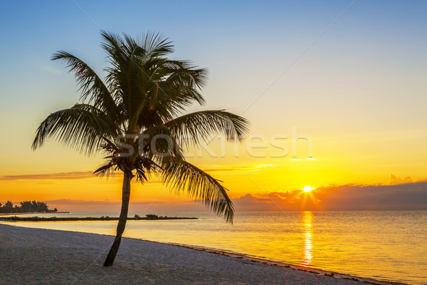 Beach with palm tree at sunset Stock photo © vwalakte