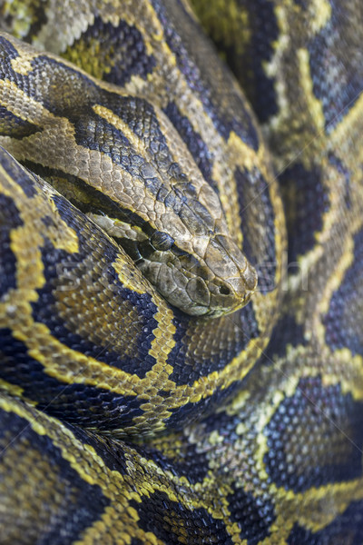 Python photo espace noir animaux Photo stock © vwalakte