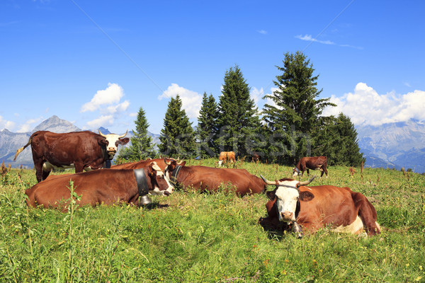landscape with cows  Stock photo © vwalakte