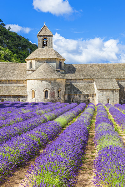 Abbey of Senanque and blooming rows lavender flowers Stock photo © vwalakte