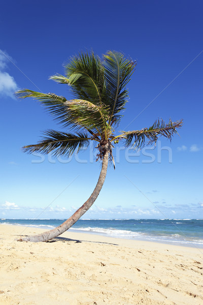 lonely palm tree Stock photo © vwalakte