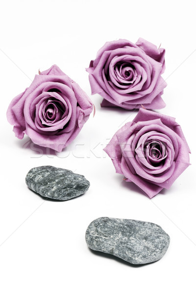 Pink roses and stones Stock photo © vwalakte