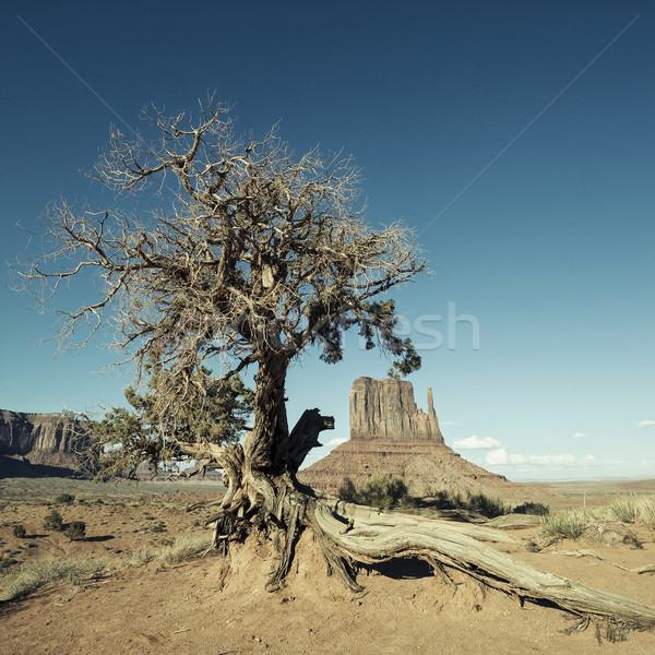 Monument Valley and tree with special photographic processing Stock photo © vwalakte