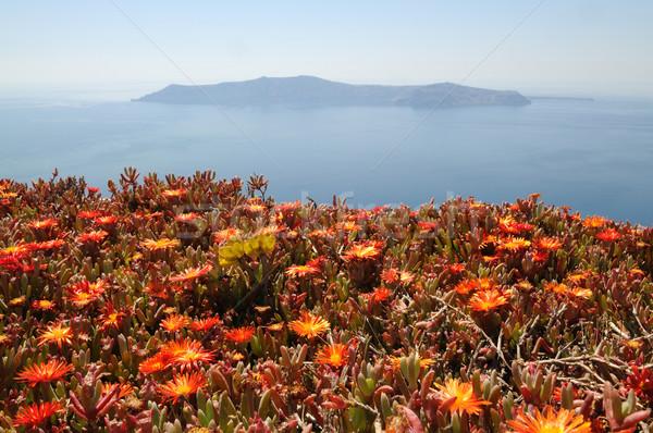 Red flowers on Santorini Stock photo © w20er