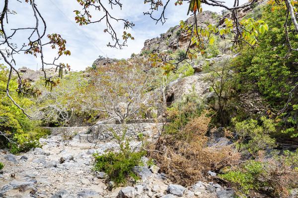 Stok fotoğraf: Görüntü · yol · doğa · manzara · ağaçlar · seyahat