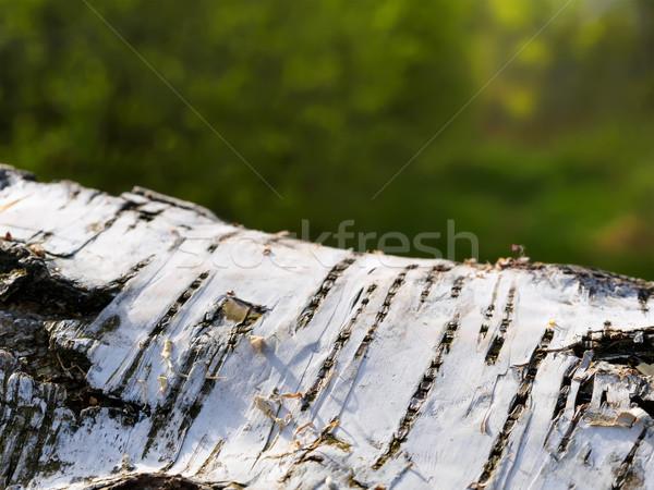 Betulla albero sfondo alberi impianto Foto d'archivio © w20er