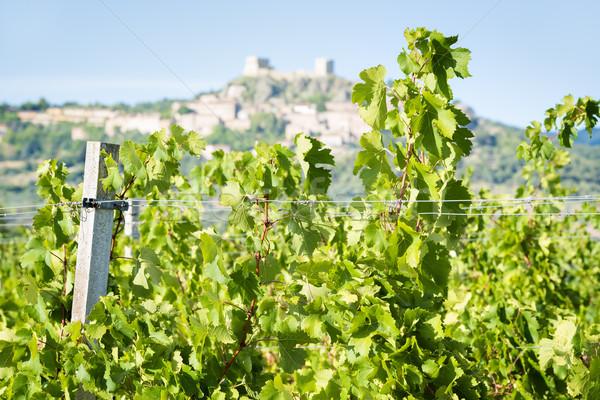 Grapevines near Montemassi Stock photo © w20er