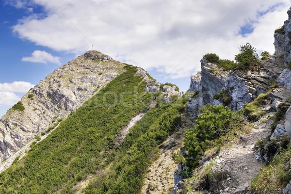 Альпы мнение дерево пейзаж горные лет Сток-фото © w20er