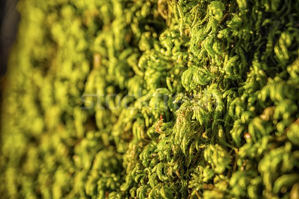 Zöld moha Alpok hegy tájkép háttér Stock fotó © w20er