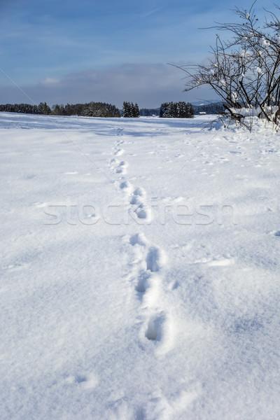 Animal pé neve imagem céu madeira Foto stock © w20er