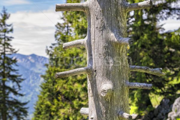 Trunk Breitenstein Bavaria Alps Stock photo © w20er