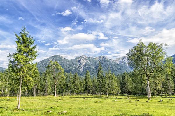 Alpes imagem paisagem árvores rio verão Foto stock © w20er