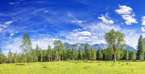 Panoráma kép Alpok tájkép fák folyó Stock fotó © w20er