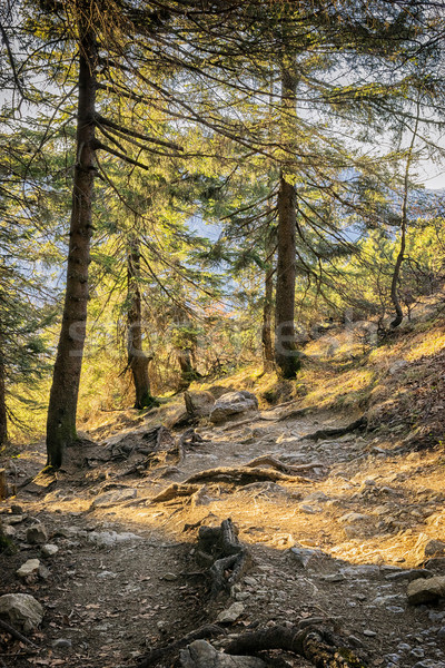 Path in Bavarian Alps Stock photo © w20er