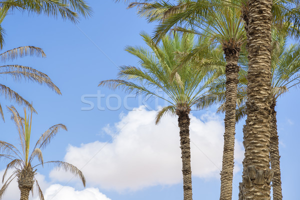 Oasis Al Haway Oman Stock photo © w20er