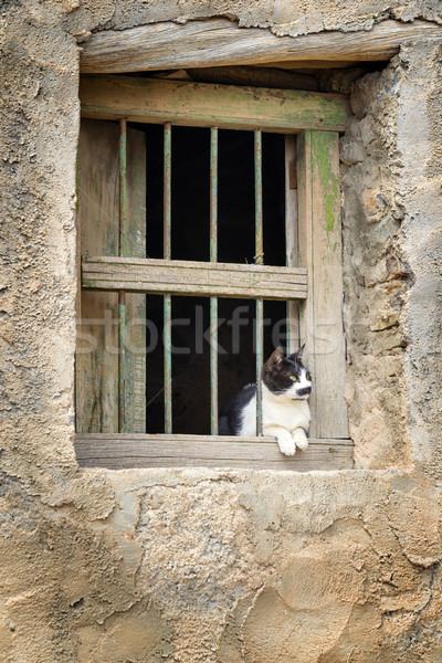 Stok fotoğraf: Umman · kedi · görüntü · oturma · pencere · köy