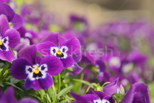 Virágágy kép néhány levél kert zöld Stock fotó © w20er