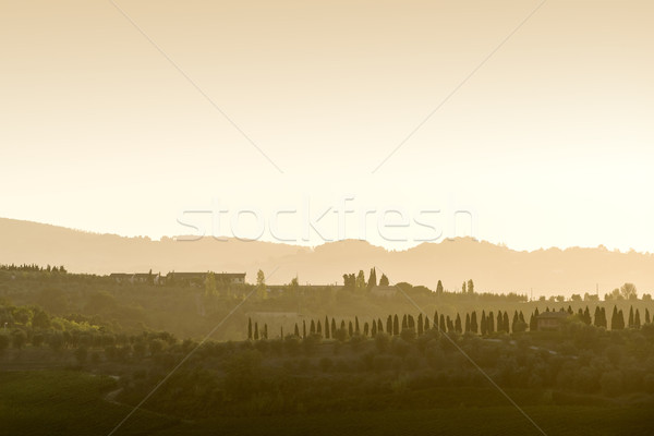 Tuscany Landscape at sunset Stock photo © w20er