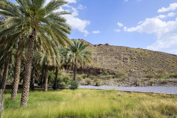 пейзаж Оман изображение Ближнем Востоке небе дерево Сток-фото © w20er