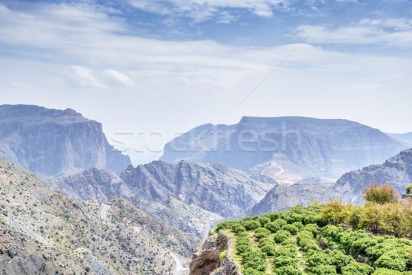 木 オマーン 画像 風景 高原 道路 ストックフォト © w20er