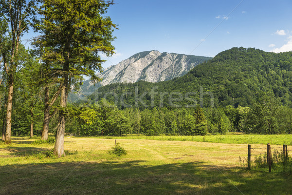 мнение горные Германия Мюнхен лет природы Сток-фото © w20er