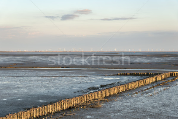 Landschap afbeelding houten noordelijk Duitsland zonsondergang Stockfoto © w20er