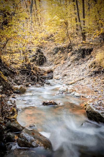 ручей лес осень фотография лет длительной экспозиции Сток-фото © w20er