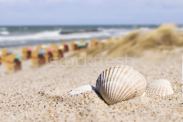 Kagyló strandszékek Balti-tenger tengerpart Németország napos Stock fotó © w20er