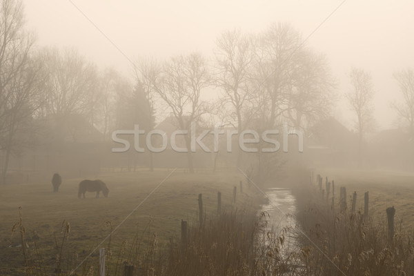 Horses on foggy morning Stock photo © w20er