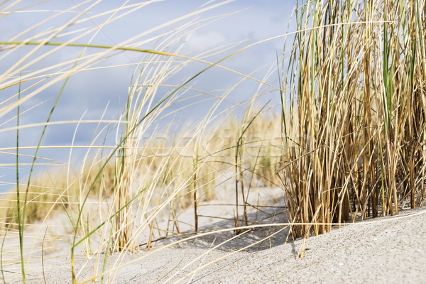 Sluiten duin gras oostzee shot zand Stockfoto © w20er