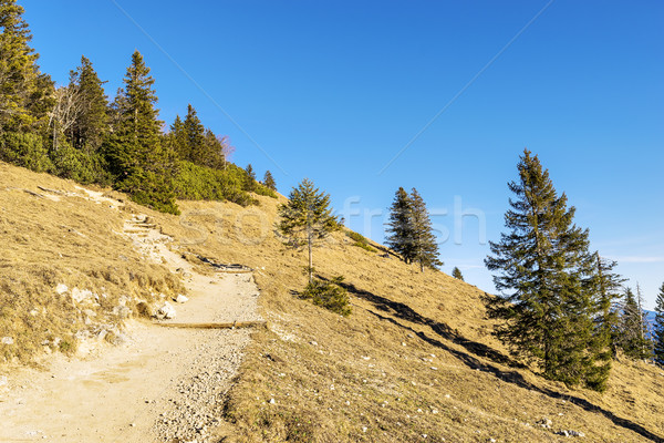 Path in Bavaria Alps Stock photo © w20er