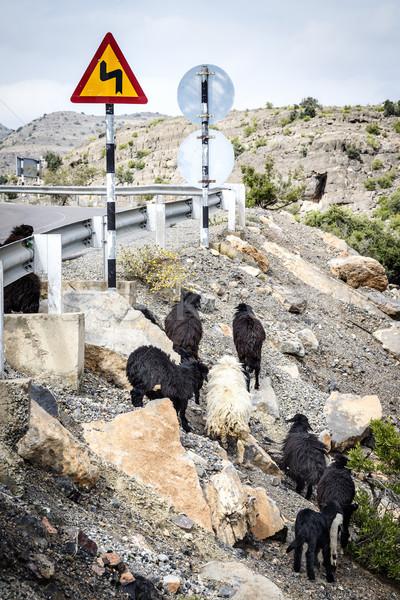 Stok fotoğraf: Umman · görüntü · yol · doğa · manzara · dağ