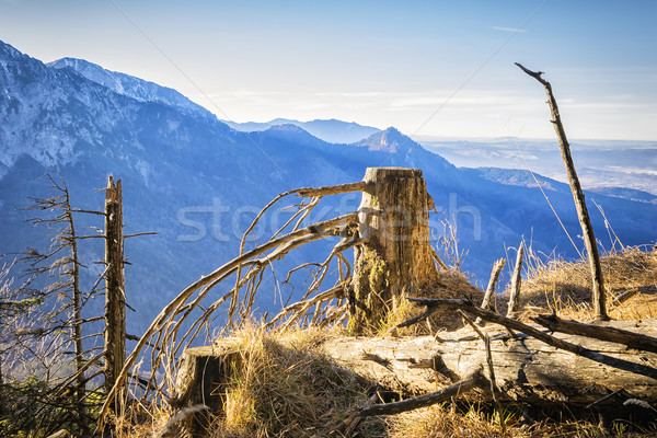 Landschap alpen berg bos achtergrond zomer Stockfoto © w20er