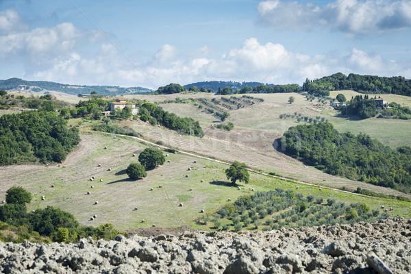 Gyönyörű tájkép Toszkána kép Olaszország fa Stock fotó © w20er