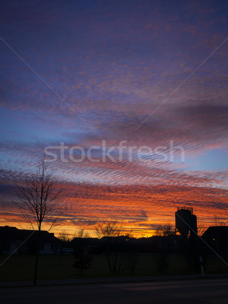 Stockfoto: Silhouet · bomen · zonsondergang · goud · Rood · wolken