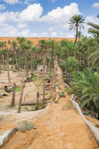 Oasis Oman image dune de sable palmiers ciel bleu Photo stock © w20er