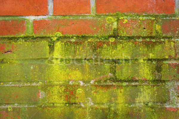Groene mos Rood muur bakstenen textuur Stockfoto © w20er