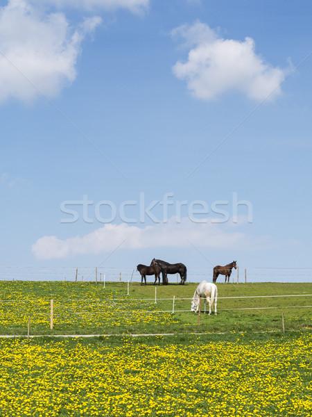 Négy lovak legelő kék ég fehér felhők Stock fotó © w20er