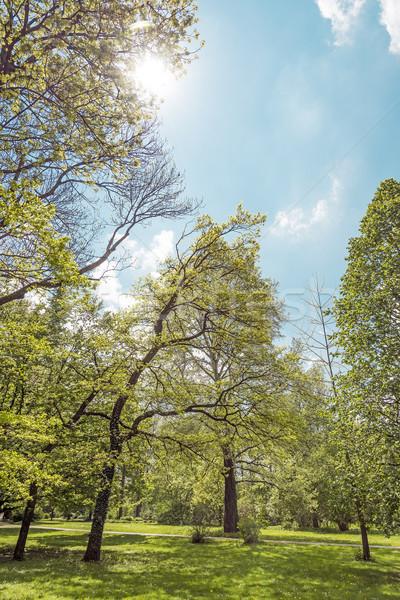 Zöld park háttérvilágítás zöld fű tavasz fa Stock fotó © w20er