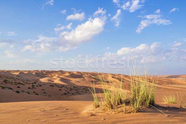Deserto Omã verde nuvens blue sky paisagem Foto stock © w20er