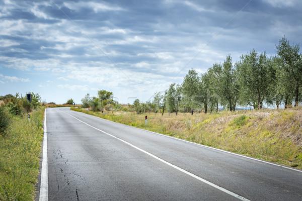 Yol manzara Toskana görüntü zeytin ağaçlar Stok fotoğraf © w20er